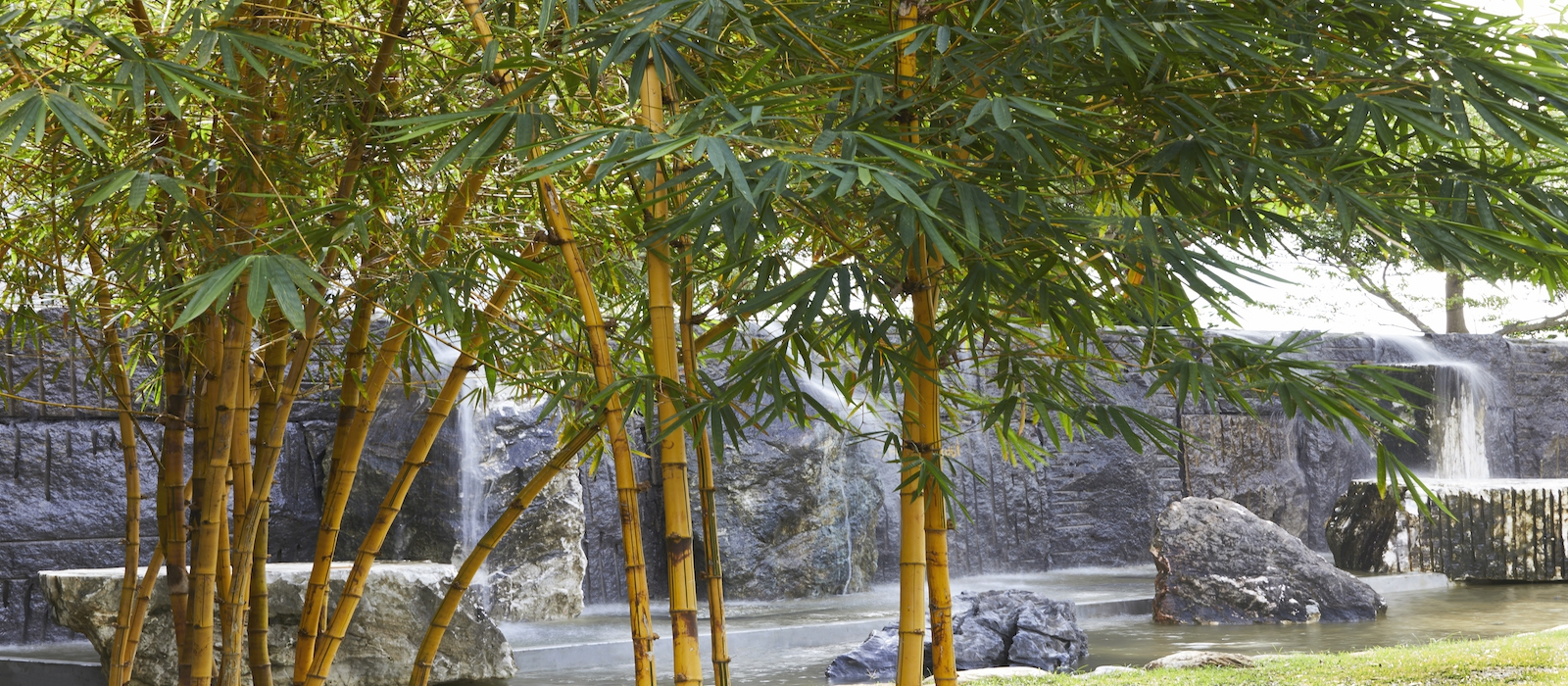 Golden stone bamboo waterfall&HERB
